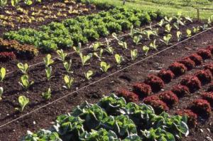 Úton a fenntartható mezőgazdaság felé