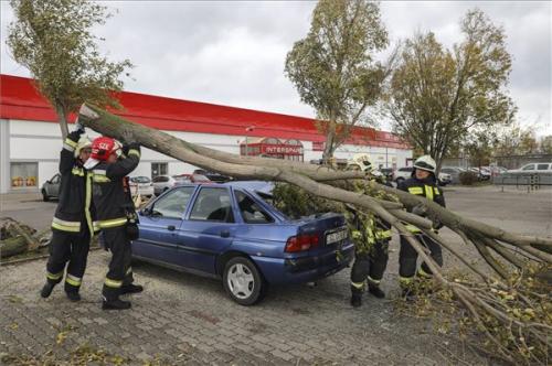 Parkoló autóra dőlt egy fa Szentendrén
