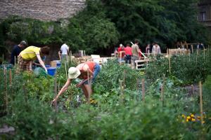 A Skanzen után a lakótelepen is terveznek közösségi kertet