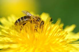 Méhek és darazsak okozta veszélyek