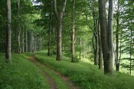 Az idei nyár hatása az erdőkre és az erdészeti munkára